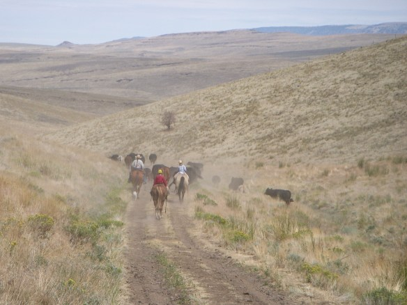 horse and riders moving cows out of the Pueblo Mountains