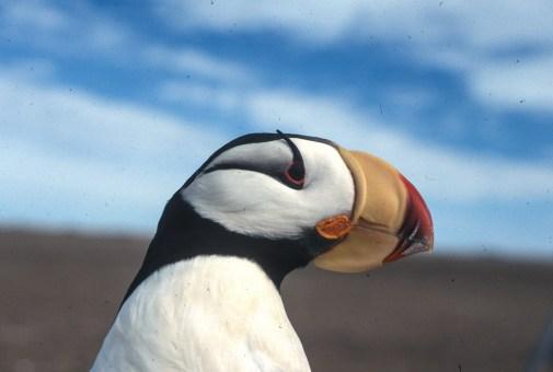 Cooper Island bird life