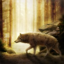 Wolf_brigther