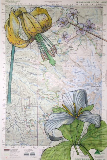 Flowers on Topographical Map, colored pencil and pen/ink, $50.00