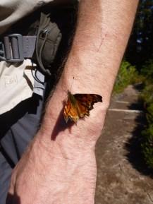 Butterfly, Spray Park Trail, Mount Rainier National Park, WA