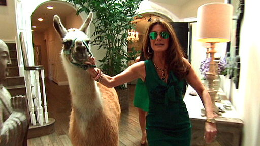 One of these is an actual llama, the other is a drama llama