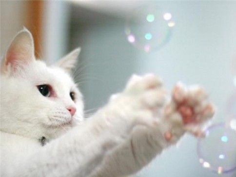 cat bubbes