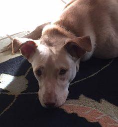 Courteous Canines, Tamara Tokash, NJ New Jersey, Help Your Dog Thrive! My Dog Thrives, Raw