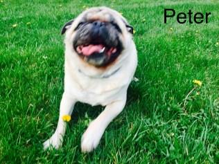 Peter Pug