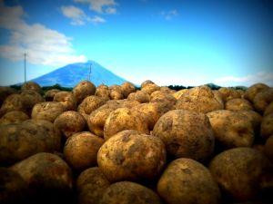 玉手農場~羊蹄山とキタアカリ