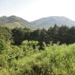 熊野古道で初心者におすすめ 神戸から日帰りコースと詳細について