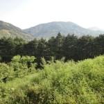 熊野古道で初心者におすすめ 大阪から日帰りコースと詳細について