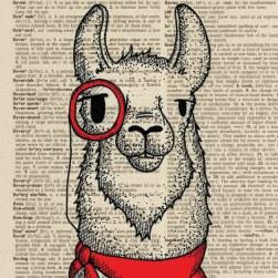 Llama_monocle.HR
