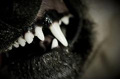 snarly dog mouth