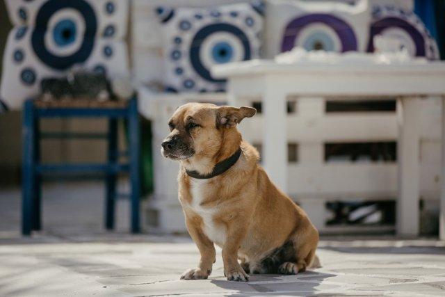 Cute dog in Mykonos Town, Greece by Tami Keehn