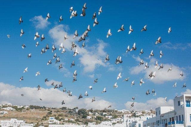 Birds in Mykonos Town, Greece by Tami Keehn