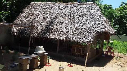 Nattu Koli Valarpu Murai - கொட்டகை முறை