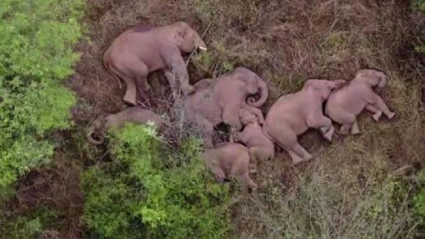 हाथी शरारत