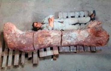 The world's largest dinosaur bones found in Argentina