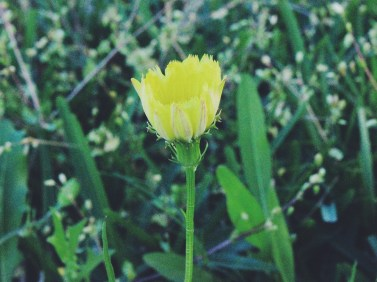 Yellow Flower by Tammie Riley