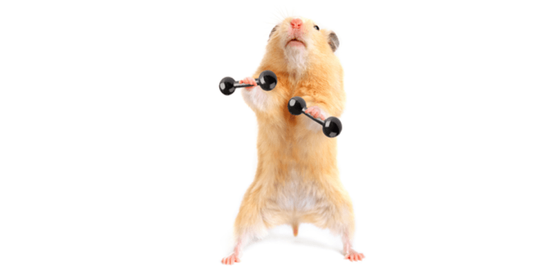 hamster lifting weights
