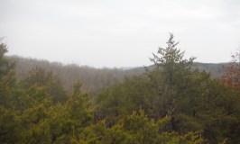 Swan Creek Wilderness 3.14.2015 Revisited