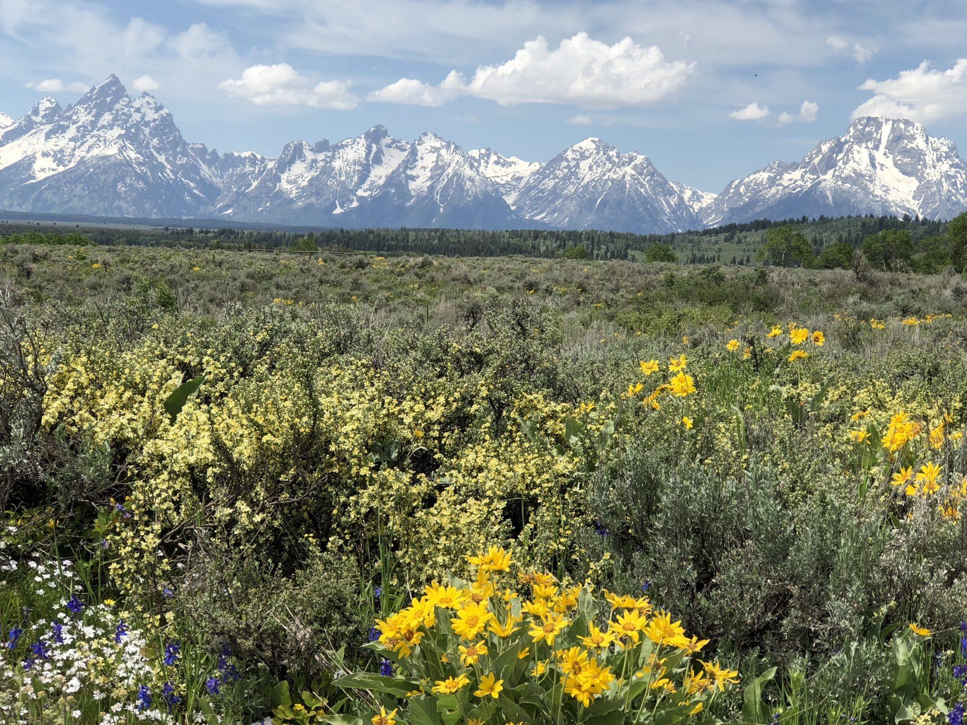 Wyoming shots
