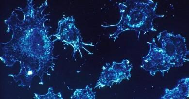 Novo otkriće: T-ćelije ubijaju tumore