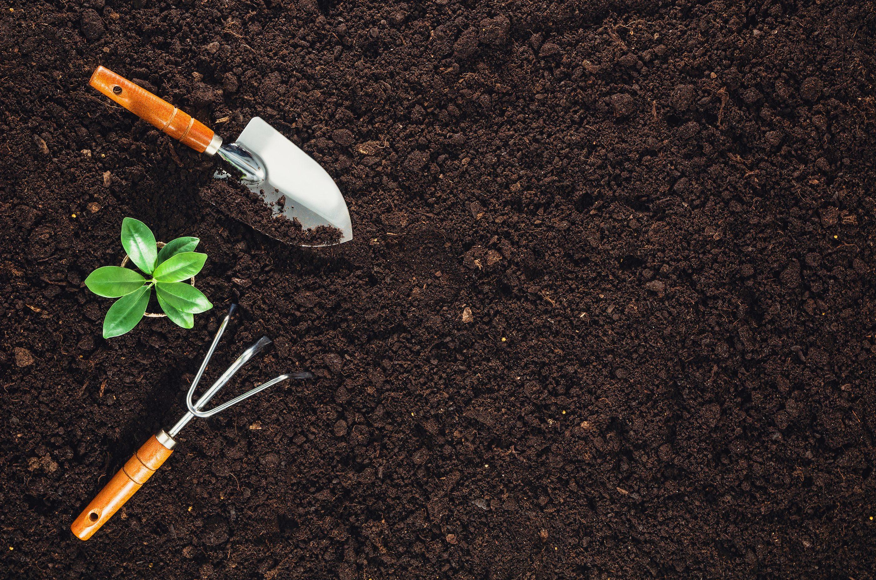 Take Advantage of the Oldsmar Organic Community Garden