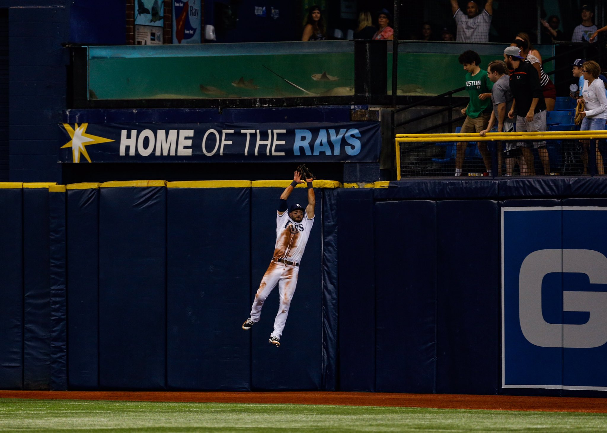 With catches like this gem from last night, it makes you wonder where the Rays would be hadn't Kevin Kiermaier missed two months of the season. (Photo Credit: Tampa Bay Rays)