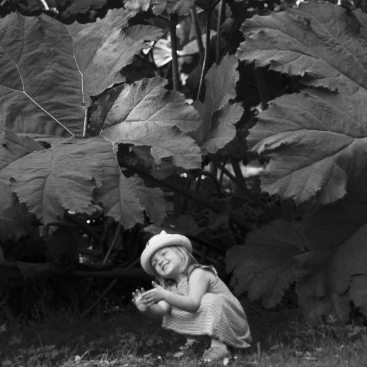 Under the Gunnera Portait