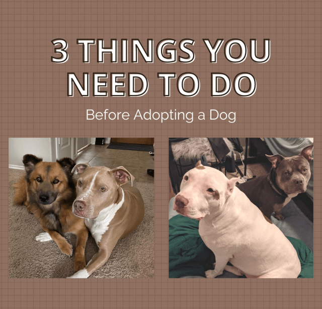 3 Things to Do Before Adopting a Dog