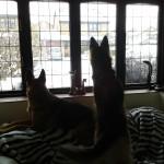 Myschka and Jezebel on guard