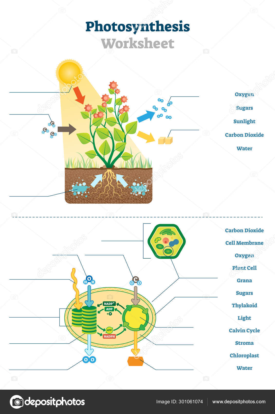 High School Biology Photosynthesis Worksheet