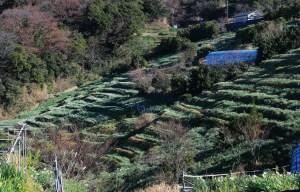 梨子ケ平の棚田