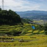 「稲倉の棚田」 撮影者:石川公康 撮影地:長野県上田市・稲倉棚田 撮影日:2016 年9 月25日 稲刈りの時期に当たりましたので、多くの子供たちが 稲刈りに参加していました。この棚田の場所から車で10分くらいで、現在放映している「真田丸」の真田家ゆかりの 場所が点在しており観光客も多く訪れていました