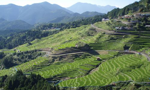 【三重県熊野市丸山千枚田】 一望できる棚田としては日本最大規模。