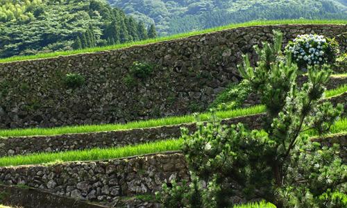 【佐賀県唐津市相知町蕨野の棚田】 8.5mにも及ぶ石積みは日本一ともいわれる。