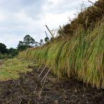 9月3日、川代棚田で稲刈り体験を実施しました。