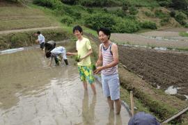 下赤阪での田植え風景