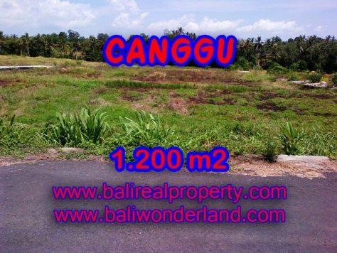 JUAL TANAH DI CANGGU Bali 1,200 m2 di Tumbak Bayuh