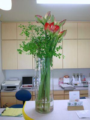 アマリリス ドーダンツツジ 受付の花