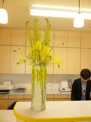 エレムルス グロリオサ 受付の花