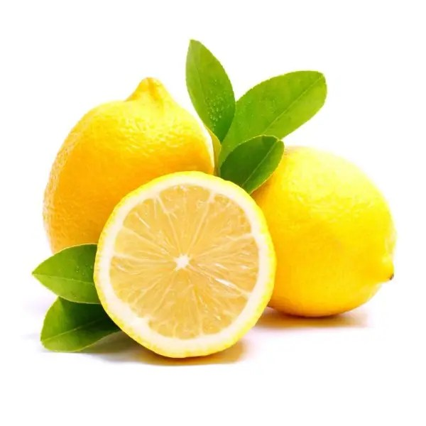 harga bibit lemon california