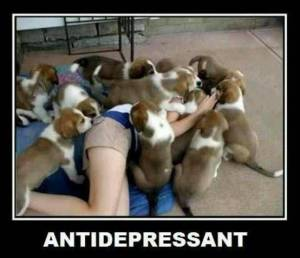 Visit some puppies, a natural antidepressant