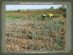 Onion plots cultivated by youths of Tana River Life Foundation