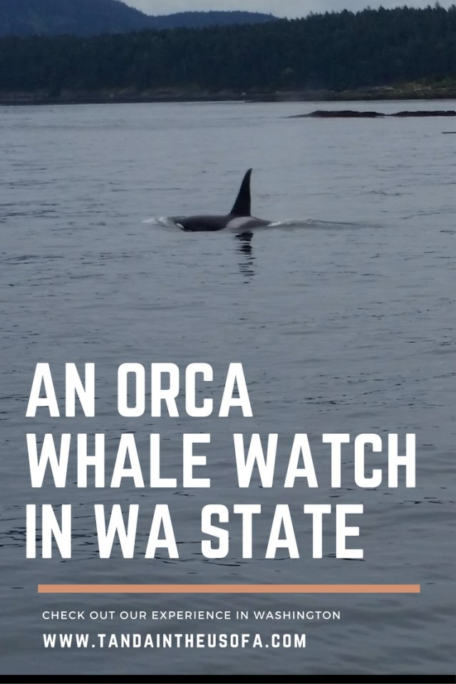 An Orca Whale Watch with Orcas Island Eclipse Charters in Washington State. A dream come true!