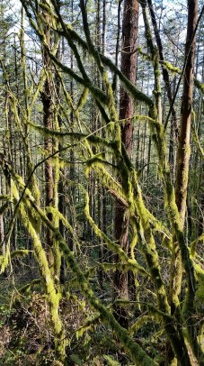 More glowing mossy trees