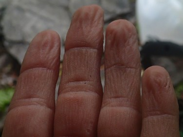 My hands after hiking in the rain.