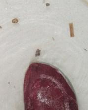 Thimble Jelly with my toes--so tiny