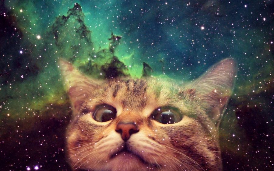 A picture of a cat in space. It's magnificent.
