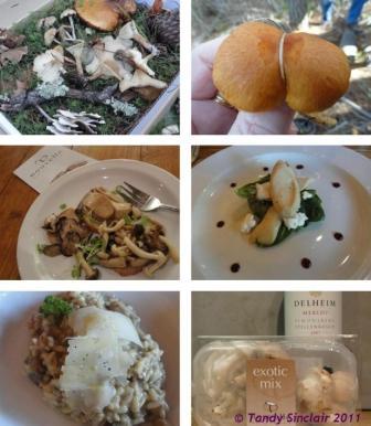 nouvelle mushroom week at delheim