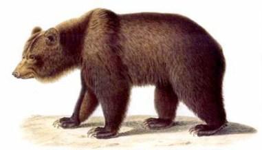 burbank bear