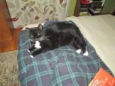 cats 008